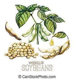 soja, plantas, acuarela, conjunto