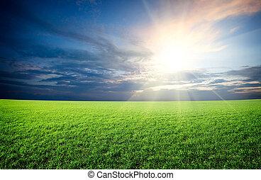 Sol atardecer y campo de hierba fresca verde bajo el cielo azul