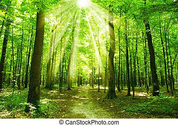 Sol forestal