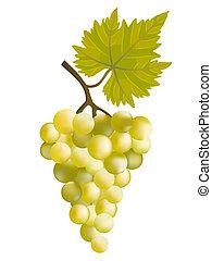 soleado, grape.