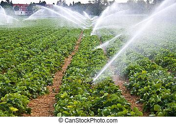 Spray de agua de agricultura
