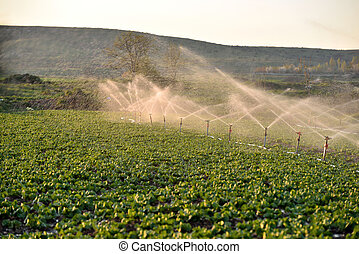 Sprinkler regando cosechas en el campo