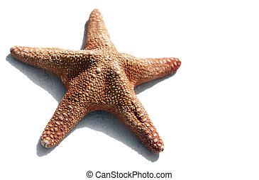 Starfish aislado