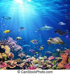 submarino, pez escollo, escena, coral, tropical
