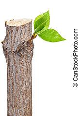 Sucursal seco con hojas de hoja