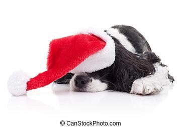 Sueños de Navidad de perros