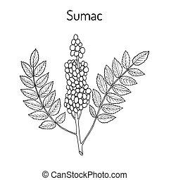Sumaco siciliano Rhus glabra rama con hojas y bayas