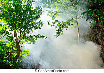 Sunbeam en el bosque de hadas