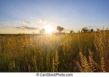 Sunset en el campo