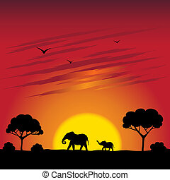 Sunset en una sabana