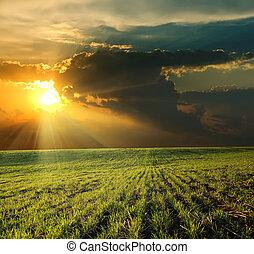 Sunset sobre el campo verde