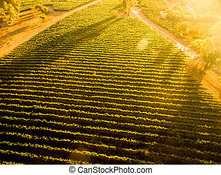 Sunset sobre el viñedo chileno. Landscape. Vista aérea