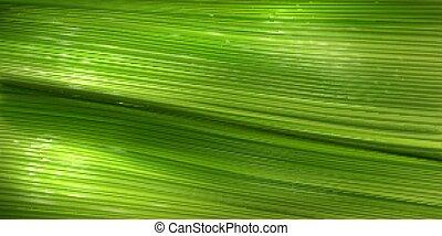 superficie, verde, palma, plátano, textura, hoja
