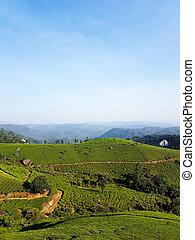 té, montaña, cielo, pendiente, paisaje, foto, kerala, azul, munnar, onda, jardín, plantación, verde