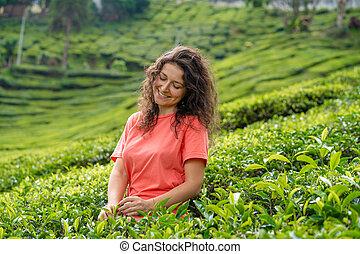 té, valle, entre, posar, niña, hermoso, morena, medio, verde, bushes.