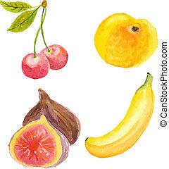técnica, albaricoque, mano, acuarela, cerezas, higos, banana., dibujado