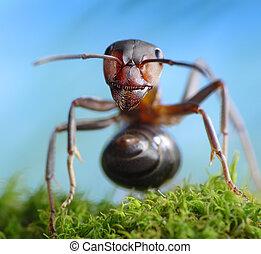 tales, formica, rufa, hormiga, bosque, ladrón