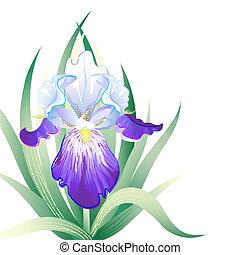 Tarjeta de vacaciones con Iris Flower