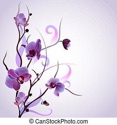 Tarjeta de vector con rama de orquídea