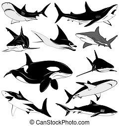 tatuaje, conjunto, vario, tiburones