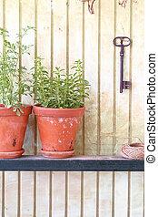 Tazas de arcilla con hierbas frescas frente a una vieja pared