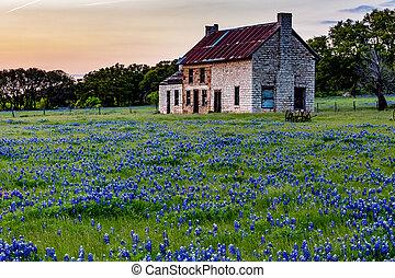 tejas, wildflowers., casa, viejo