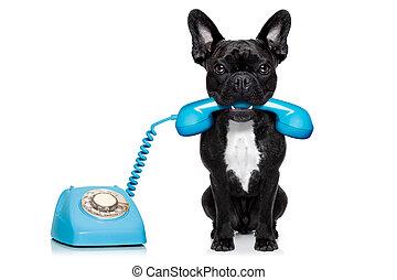 Teléfono de perro