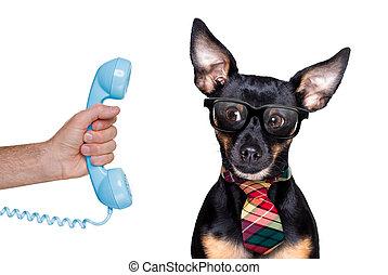 teléfono, o, perro, teléfono