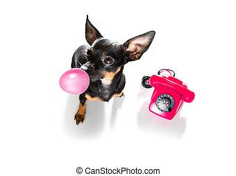 teléfono, o, teléfono, perro