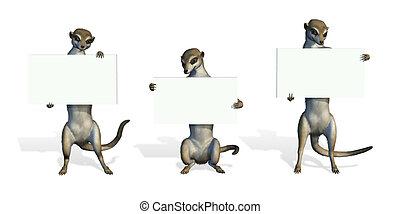 tenencia, meerkats, tres, blanco, señales