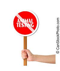 tenencia, prueba, parar la muestra, mano animal, rojo