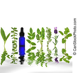 terapia herbaria