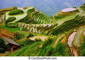 terrazas de arroz en la montaña de Yunnan, China