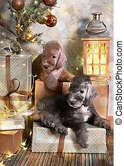 terrier, árbol de navidad, perritos, bedlington, dos, debajo, acostado