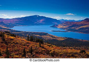 territorio, canadá, pez, lago, yukon