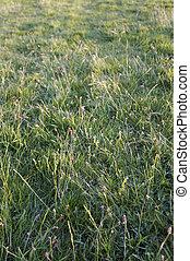 Textura de hierba