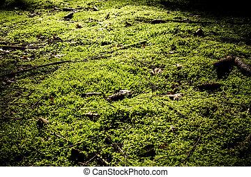 Textura Moss