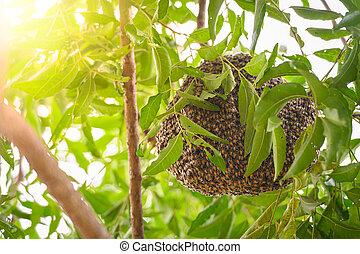thailand., nido, siamés, neem, rama, abejas, jardín, árbol