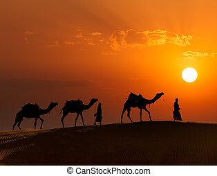 thar, camellos, rajasthan, drivers), dunas, india, viaje, -, dos, jaisalmer, indio, plano de fondo, rajasthan, cameleers, siluetas, (camel, desierto, sunset.