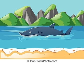 Tiburón nadando en el océano