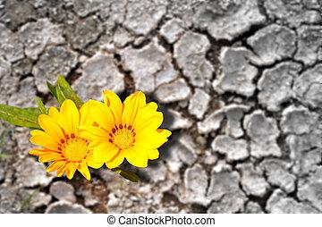 tierra, árido, concepto, florecer, flores, persistence.