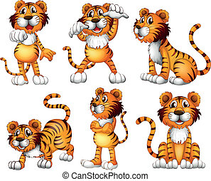 tigre, posiciones, seis