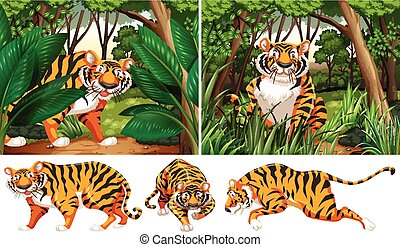 Tigres en el bosque profundo