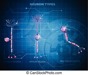 Tipos neurónicos