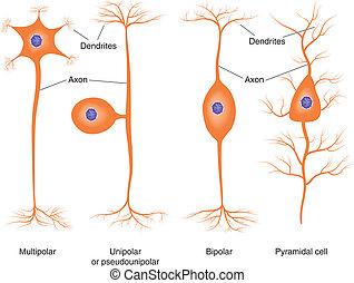 Tipos neuróticos básicos