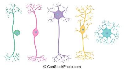 Tipos neurológicos básicos
