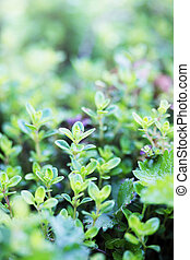 Tiros jóvenes de arbustos verdes