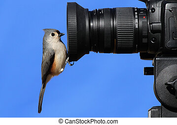 titmouse, cámara