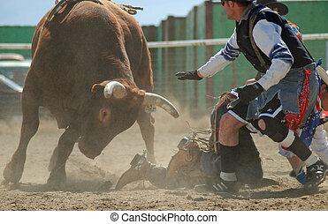 Toro con payaso de rodeo