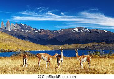 Torres del dolor, patagonia, chile